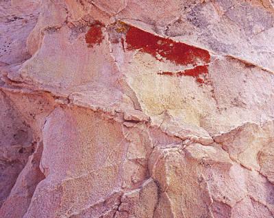 Photograph - Bleeding Rock-h by Tom Daniel