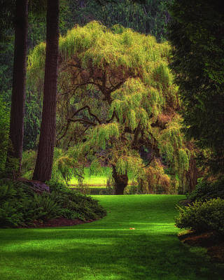 Photograph - Bloedel Reserve by Thomas Hall