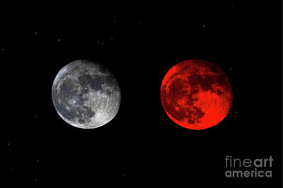 Photograph - Blood Red Wolf Supermoon Eclipse Series 873e by Ricardos Creations