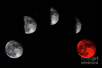 Photograph - Blood Red Wolf Supermoon Eclipse Series 873h by Ricardos Creations