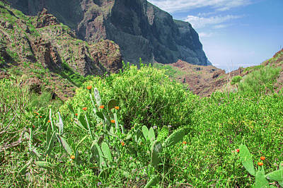 Photograph - Blooming Agaves In Masca by Sun Travels