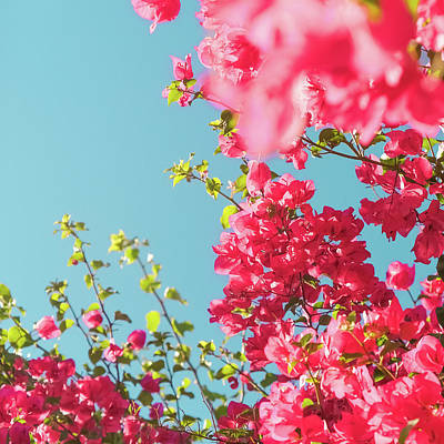 Photograph - Blooming Beauty I by Anne Leven