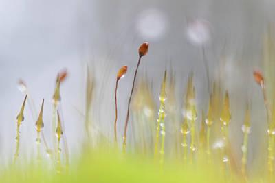 Blooming Moss Art Print