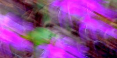 Photograph - Blossom Abstract by Jerry Sodorff