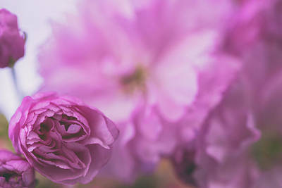Photograph - Blossoms And Spring by Kunal Mehra