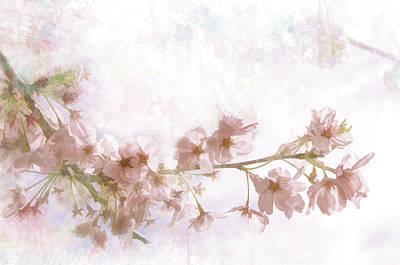 Photograph - Pink Sakura Blossoms by Marilyn Wilson