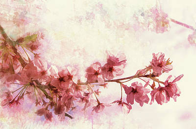 Photograph - Sakura Blossoms by Marilyn Wilson