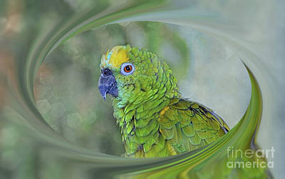 Photograph - Blue Fronted Amazon Parrot by Elaine Manley