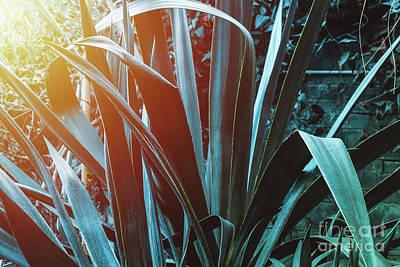 Photograph - Blue Agave With Sunlight by Marina Usmanskaya