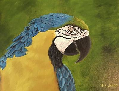 Blue And Gold Mccaw Art Print