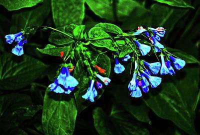 Photograph - Blue Bells by Bill Jonscher