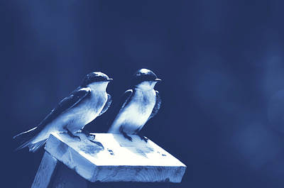 Photograph - Blue Birds by JAMART Photography