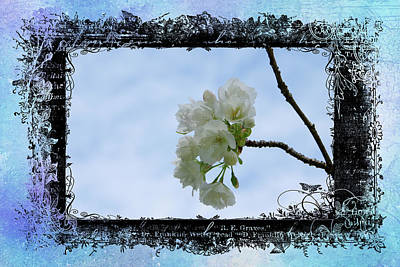 Photograph - Blue Blossoms by Marilyn Wilson
