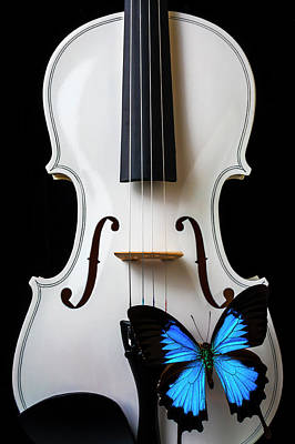Photograph - Blue Butterfly On White Violin by Garry Gay