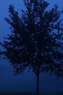 Photograph - Blue Cherry Tree by Sandra Day