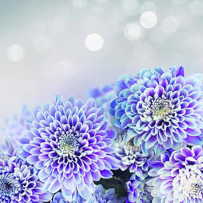 Travel - Blue Chrysanthemum  by Anastasy Yarmolovich