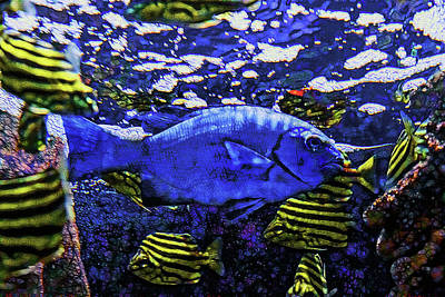 Photograph - Blue Fish by Miroslava Jurcik