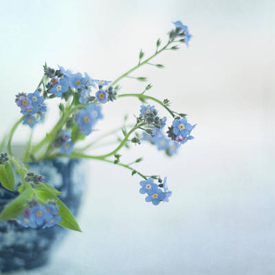Forget Me Nots Wall Art - Photograph - Blue Flowers by Jill Ferry