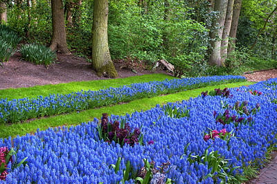 Photograph - Blue Flowers River In Keukenhof by Jenny Rainbow