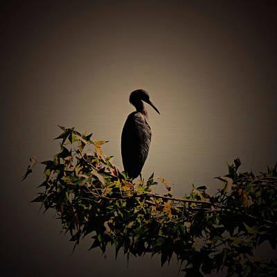 Photograph - Blue Heron Standing Alone by Daniela Duncan