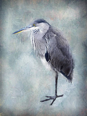 Animals Photos - Blue heron standing by Mihaela Pater