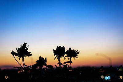 Blue Hour Sunset With Flowers Art Print