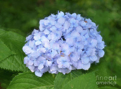 Photograph - Blue Hydrangea Bush by Kerri Farley