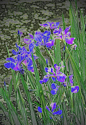 Ira Marcus Royalty-Free and Rights-Managed Images - Blue Iris Impressions  by Ira Marcus