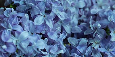 Photograph - Blue Lilacs by Mark Shoolery