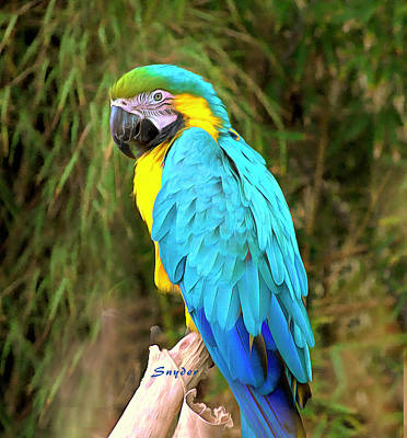 Painting - Blue Macaw by Barbara Snyder