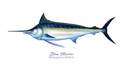 Sports Paintings - Blue Marlin by Charles Harden