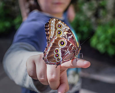 Photograph - Blue Morpho by Steven Greenbaum