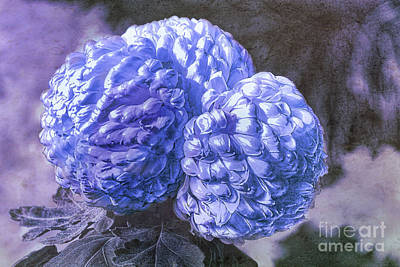 Mixed Media - Blue Mums by Elaine Manley