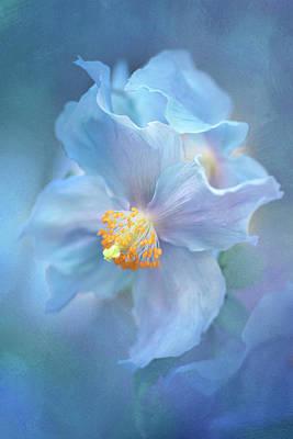 Photograph - Blue Poppy Dancers by Kathleen Clemons
