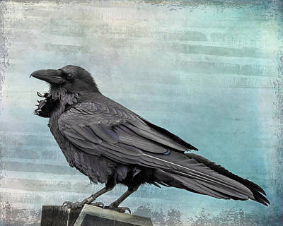 Photograph - Blue Raven by Mary Hone