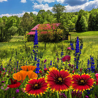 Photograph - Blue Ridge Country Wildflowers by Debra and Dave Vanderlaan