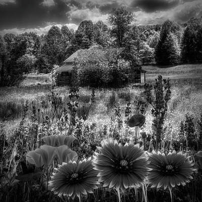 Photograph - Blue Ridge Country Wildflowers In Black And White by Debra and Dave Vanderlaan