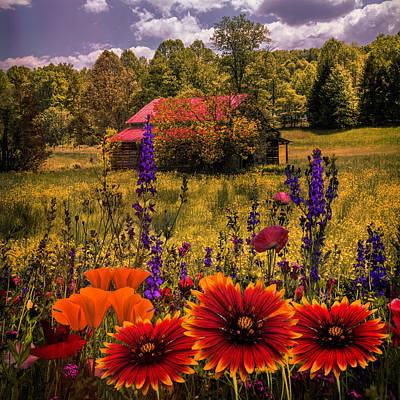 Photograph - Blue Ridge Country Wildflowers On An Autumn Afternoon by Debra and Dave Vanderlaan