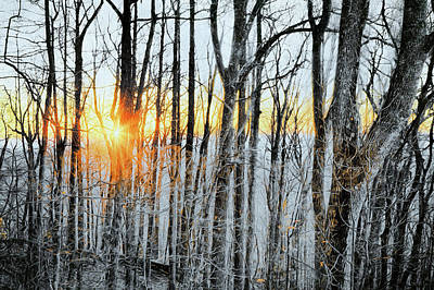 Painting - Blue Ridge Stick Trees Of Winter Ap by Dan Carmichael