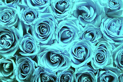 Photograph - Blue Roses by Top Wallpapers
