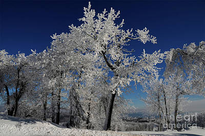 Photograph - Blue Skies In Winter by Lois Bryan