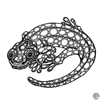 Drawing - Blue Spotted Salamander by Amy E Fraser