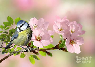 Pyrography - Blue Tit On Apple Blossom by Morag Bates