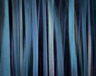 Photograph - Blue Trees 1 by Peter OReilly