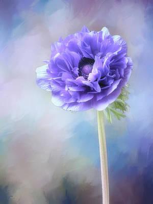 Photograph - Blue Windflower by Usha Peddamatham