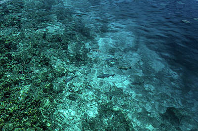 Photograph - Blue World Of Coral Reef by Jenny Rainbow