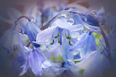 Photograph - Bluebell Glade by Valerie Anne Kelly