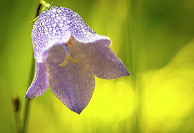 Photograph - Bluebell by Karen and Phil Rispin