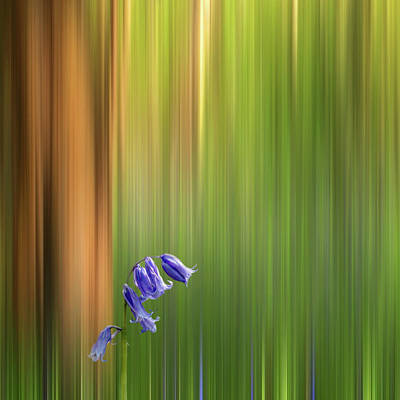 Photograph - Bluebell Wood Dream by Gill Billington