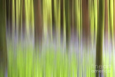 Bluebells Wall Art - Photograph - Bluebell Woods by John Edwards